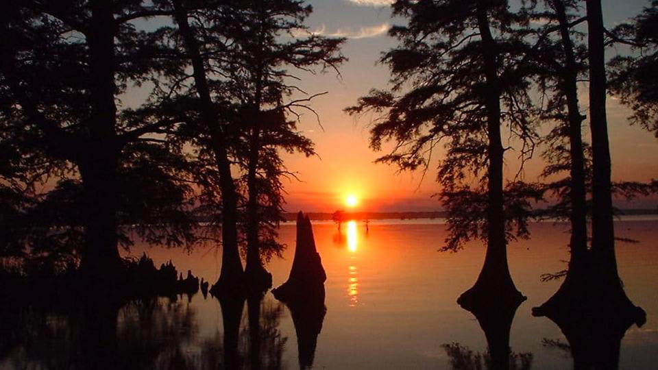 Discover Reelfoot Lake